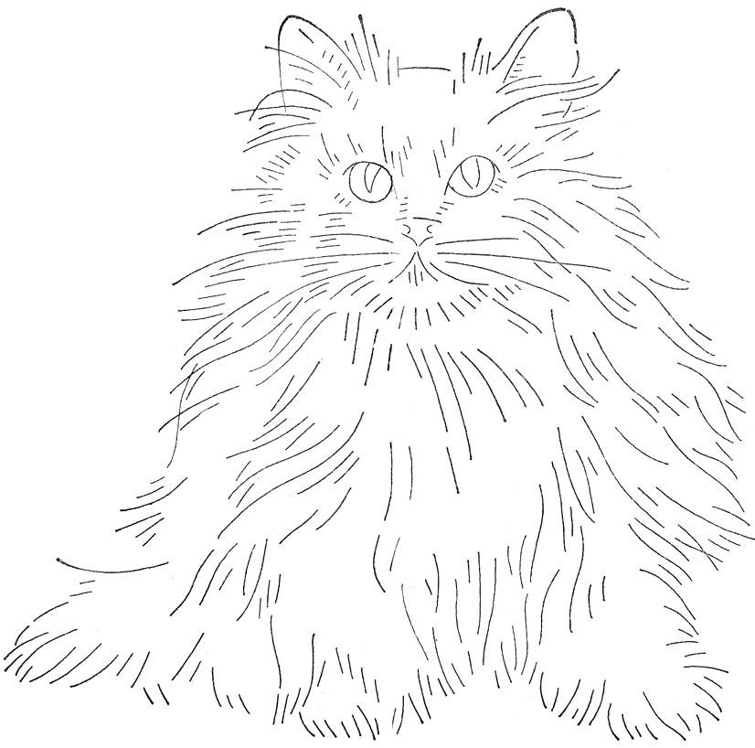 wb-cat1
