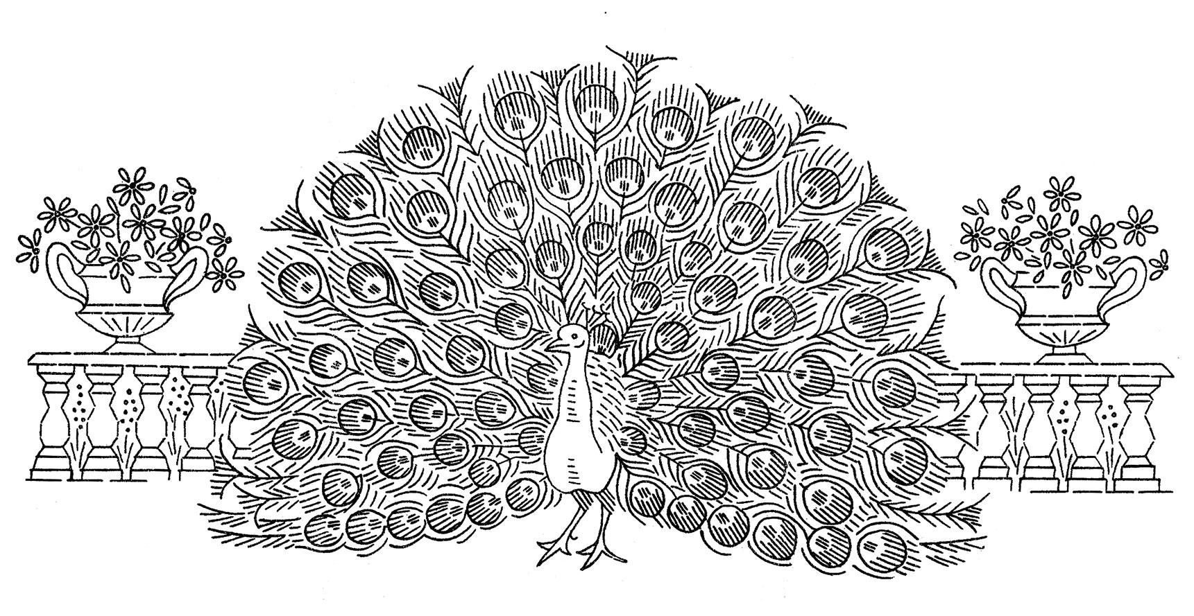 http://qisforquilter.com/wp-content/uploads/Laura-Wheeler-7107-peacocks-2.jpg