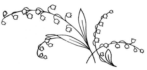 Lily-of-the-Valley-3