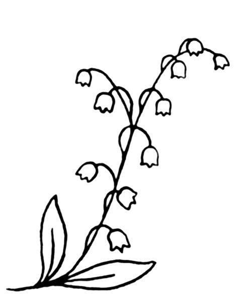 Lily-of-the-Valley-4