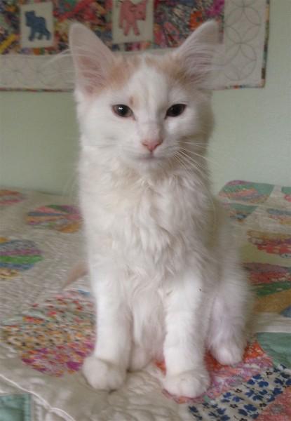 Sasha-3-months
