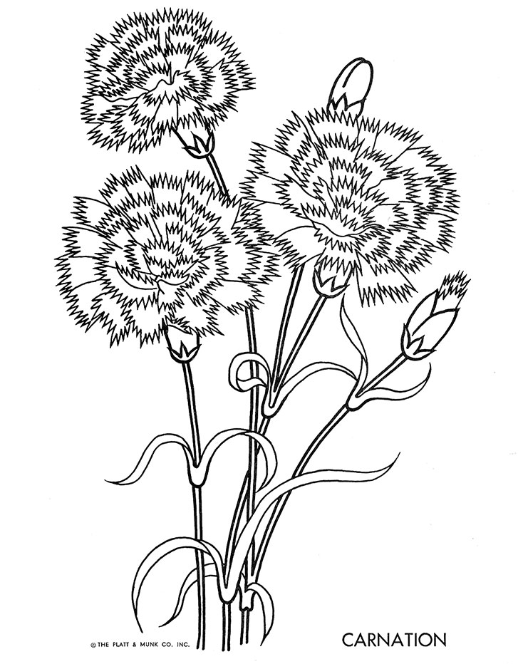 Carnation Flower Line Drawing : Flowers to color q is for quilter