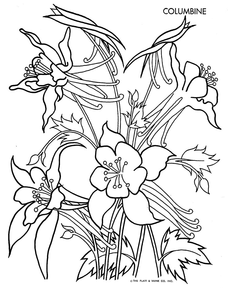 Gallery For gt Columbine Flower Drawing