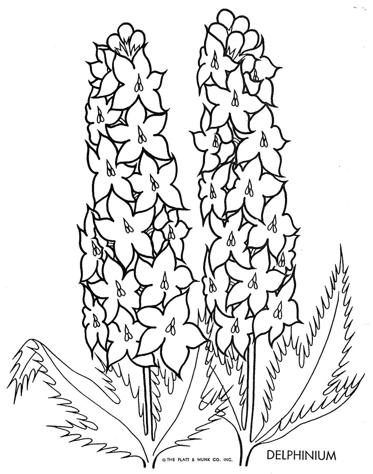 Go Back > Gallery For > Delphinium Flower Drawing Wedding Bouquet Coloring Pages