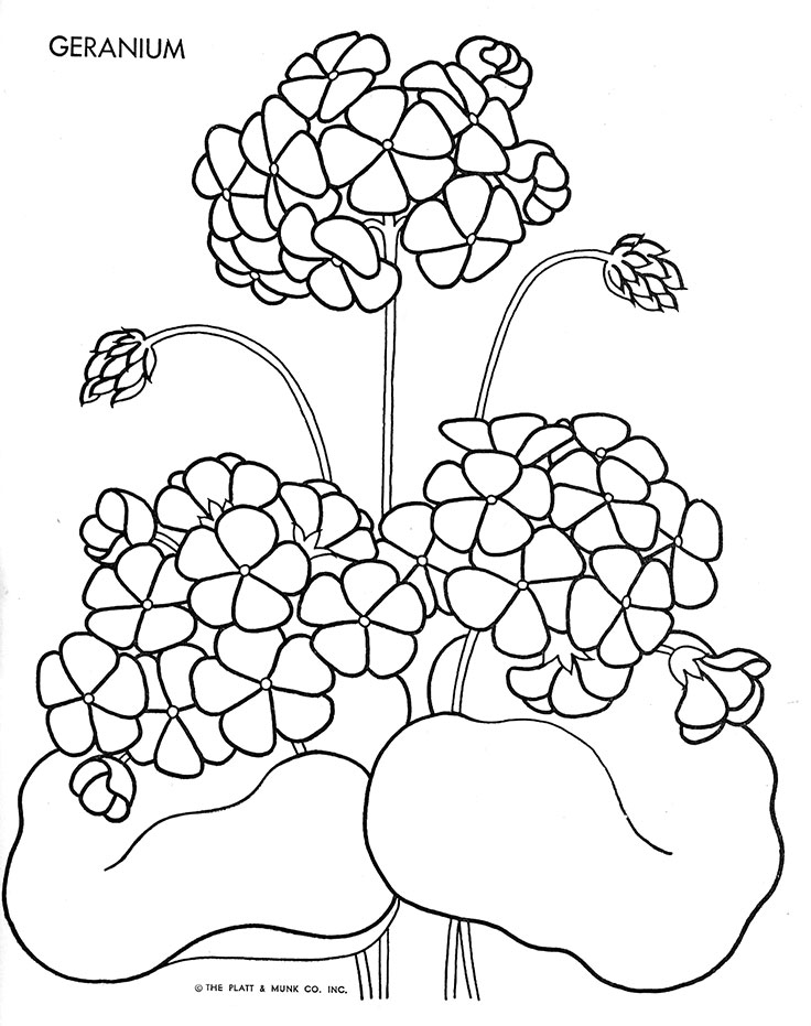 geranium coloring page - geranium coloring pages coloring pages