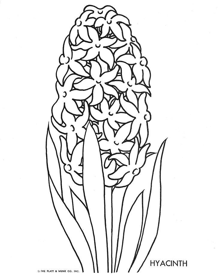 Hyacinth Coloring Page