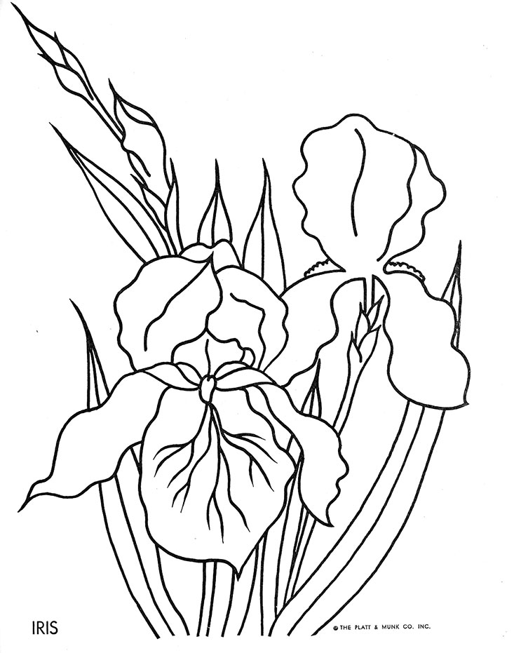 iris coloring pages - flowers to color q is for quilter